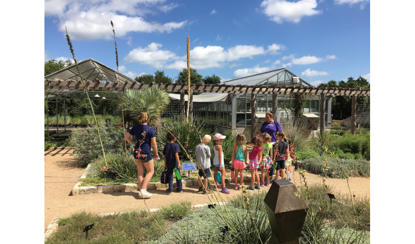 Campers explore the Wildflower Center