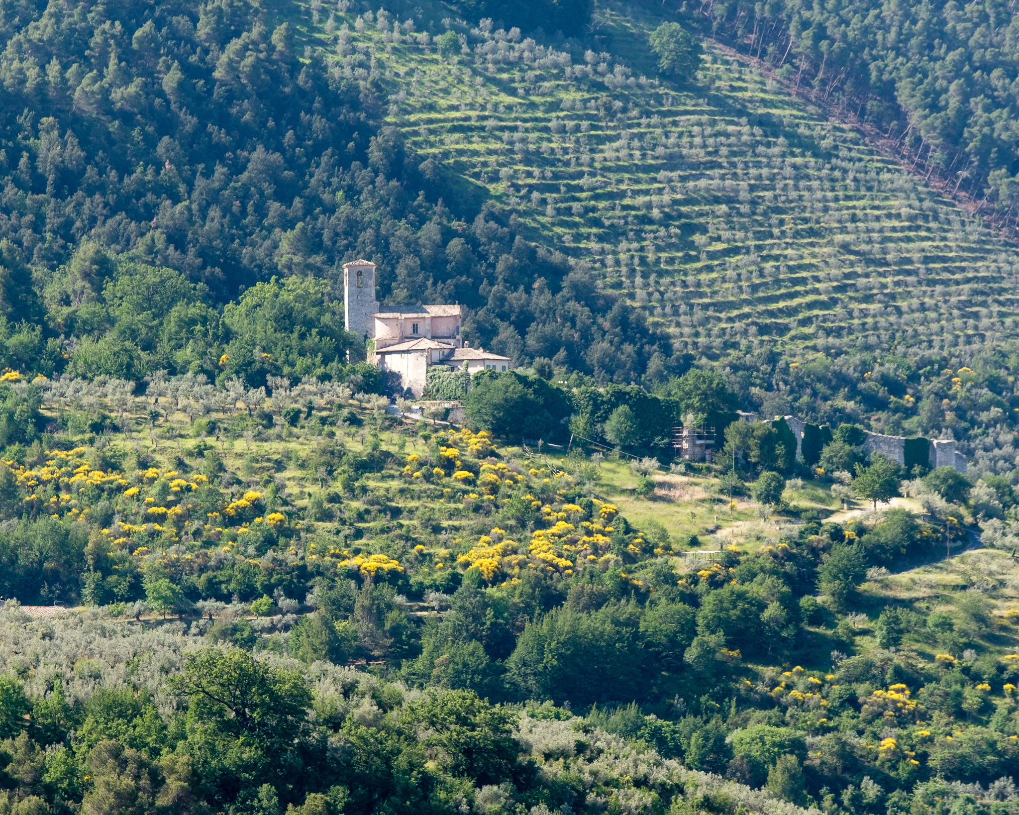 View of the central Italian countryside, with groves of olive trees seen behind an older structure.