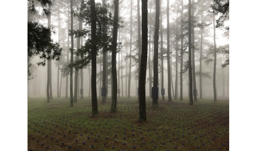 A view of a grove of trees with fog in the background, and small blue blocks on the ground interspersed in front of and between the trees