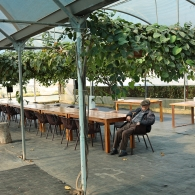 An elderly man sitting at a table inside a greenhouse-like space with hanging plants surrounding him
