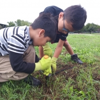 Two young boys wearing gloves lean over a shovel gardening