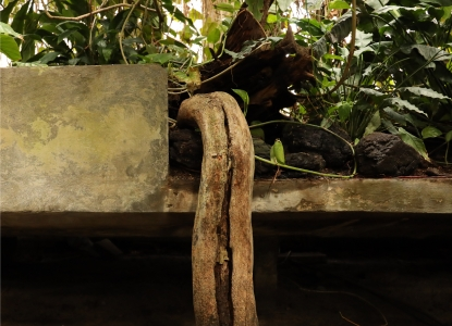 A large, trunk-like plant root extends beyond the boundaries of a concrete planter as leaves and vines spindle behind it